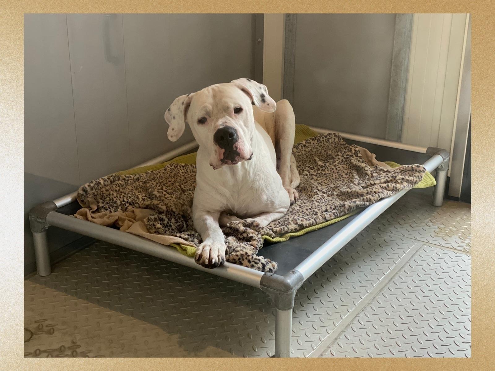 Nieuwe bedden voor de honden! Help jij mee?