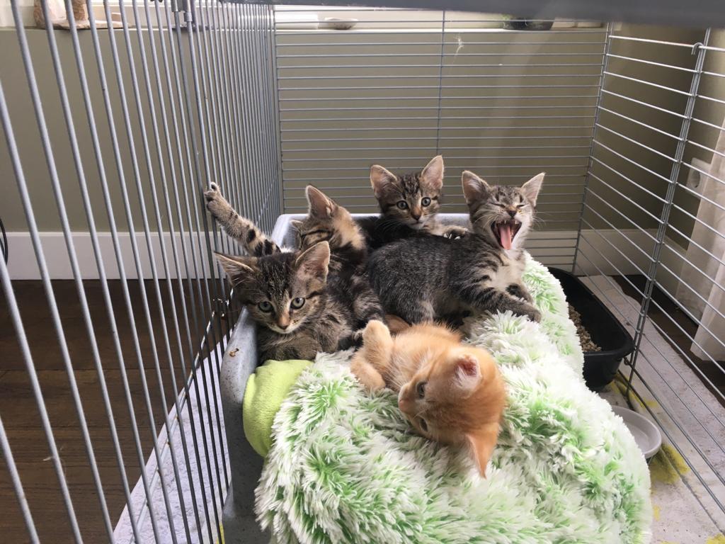 Het gaat goed met de 5 gedumpte kittens